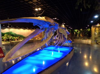 Cool whale skeleton