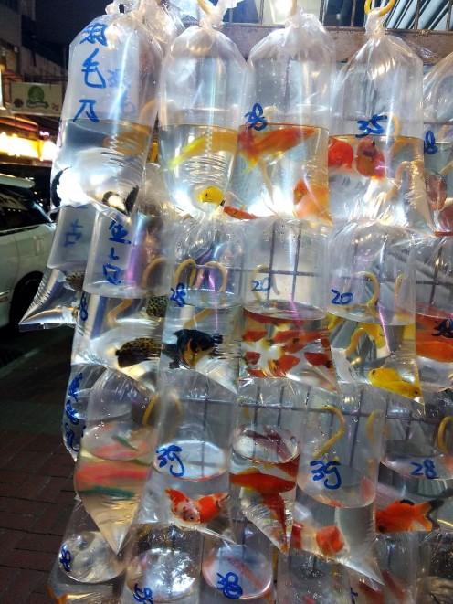Goldfish Market goldfish