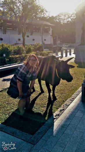 Lots of sacred cows onsite